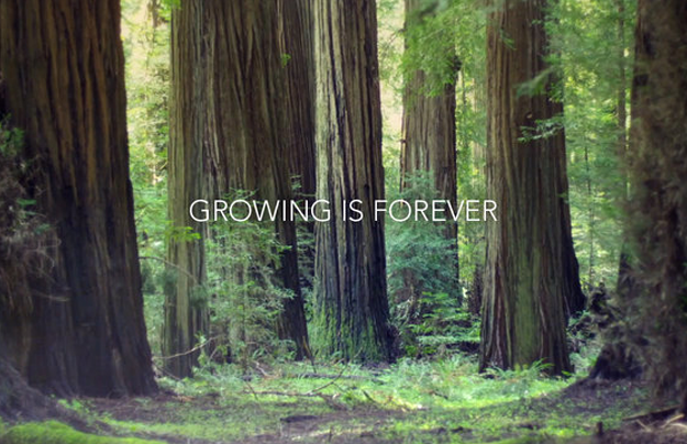 Growing is Foreveer - Jesse Rosten